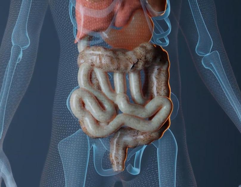 Common Diseases of the Gut